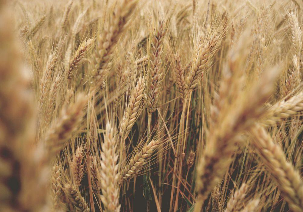 sklep-rolniczy-nasiona